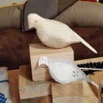 rough-shape-dove